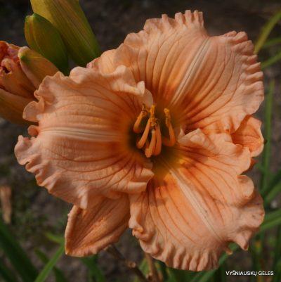 viendienes-coral-masterpiece