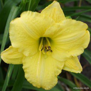 viendienes-green-gold