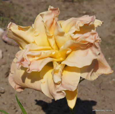 viendienes-meringue-mirage