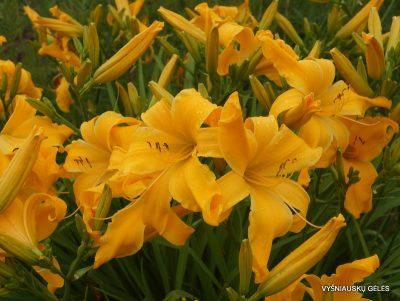 viendienes-orange-spider-3