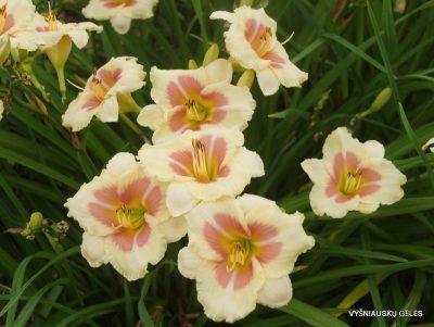 viendienes-when-my-sweetheart-returns-2