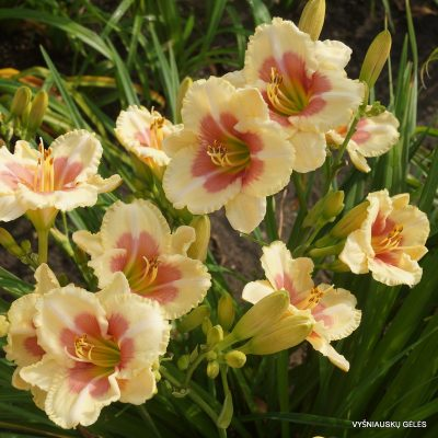 viendienes-when-my-sweetheart-returns