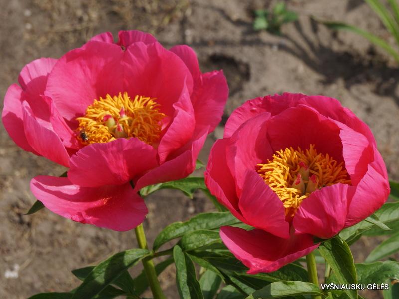 bijunai-rose-garland-3