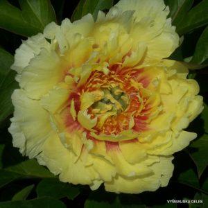 bijunai-yellow-gem