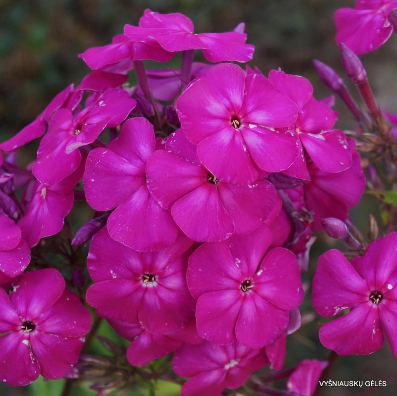 flioksai-'Gartendirector-Brodersen' (3)