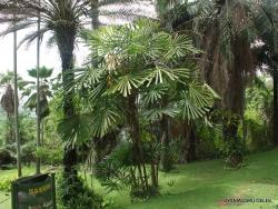 Guayaquil. Botanical garden. (10)