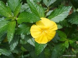 Guayaquil. Botanical garden. (12)