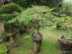 Guayaquil. Botanical garden. (7)