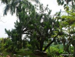 Guayaquil. Botanical garden. (9)