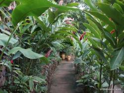 Guayaquil. Botanical garden. Alpinia sp. (2)