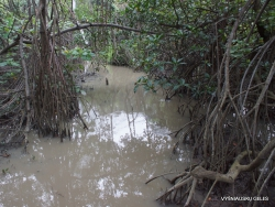 Guayaquil. Historical park. Mangrove forest