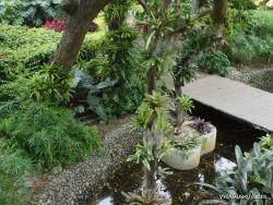 Guayaquil. Jardines del Malecon. (4)