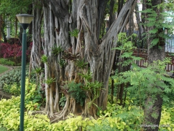 Guayaquil. Jardines del Malecon. (7)
