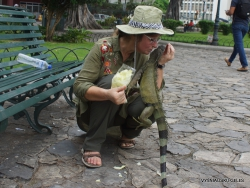 Guayaquil. Seminario park. Green iguana (Iguana iguana) (23)