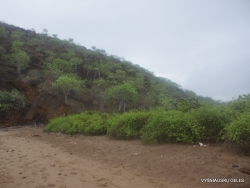 Floreana Isl. Cormorant Point. (7)