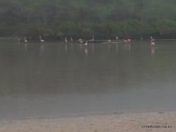 Floreana Isl. Cormorant Point. American flamingos (Phoenicopterus ruber)