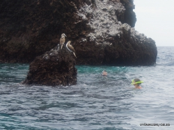 Floreana Isl. Devil's Crown. (10)