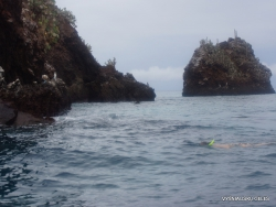 Floreana Isl. Devil's Crown. (12)