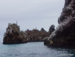 Floreana Isl. Devil's Crown. (17)
