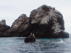Floreana Isl. Devil's Crown. (42)