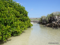Genovesa Isl. Darwin Bay. (11)