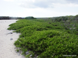 Genovesa Isl. Darwin Bay. (2)