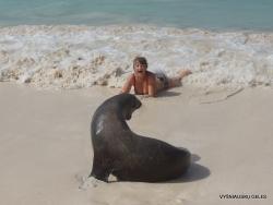 San Cristobal Isl. Cerro Brujo. Galápagos sea lion (Zalophus wollebaeki) (10)