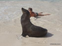 San Cristobal Isl. Cerro Brujo. Galápagos sea lion (Zalophus wollebaeki) (11)
