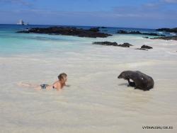 San Cristobal Isl. Cerro Brujo. Galápagos sea lion (Zalophus wollebaeki) (13)