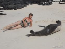 San Cristobal Isl. Cerro Brujo. Galápagos sea lion (Zalophus wollebaeki) (14)