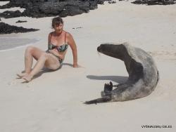 San Cristobal Isl. Cerro Brujo. Galápagos sea lion (Zalophus wollebaeki) (15)