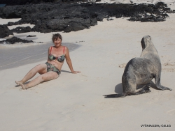 San Cristobal Isl. Cerro Brujo. Galápagos sea lion (Zalophus wollebaeki) (16)