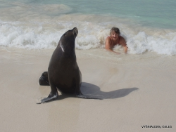 San Cristobal Isl. Cerro Brujo. Galápagos sea lion (Zalophus wollebaeki) (7)