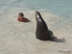 San Cristobal Isl. Cerro Brujo. Galápagos sea lion (Zalophus wollebaeki) (9)