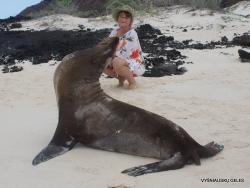 San Cristobal Isl. Cerro Brujo. Galápagos sea lion (Zalophus wollebaeki)