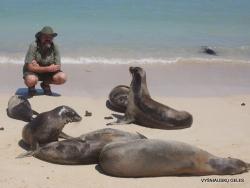 Santa Fe Isl. (10) Galápagos sea lion (Zalophus wollebaeki)