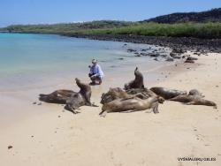 Santa Fe Isl. (6) Galápagos sea lion (Zalophus wollebaeki)
