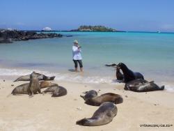 Santa Fe Isl. (8) Galápagos sea lion (Zalophus wollebaeki)