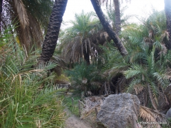 Preveli gorge (15)