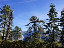 Josemičio nacionalinis parkas. Glacier Point (14)