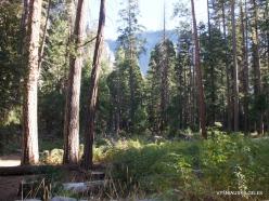 Josemičio nacionalinis parkas. Josemičio slėnis (2)