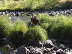 Josemičio nacionalinis parkas. Josemičio slėnis. Merced upė. Viksva (Carex sp.)