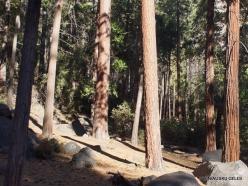 Josemičio nacionalinis parkas. Josemičio slėnis