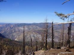 Josemičio nacionalinis parkas. Miškas po gaisro