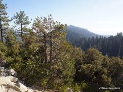 Karalių kanjono nacionalinis parkas (11)