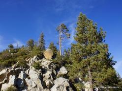 Karalių kanjono nacionalinis parkas (13)