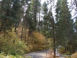 Sekvojos nacionalinis parkas (1)