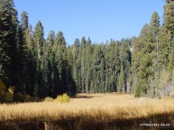 Sekvojos nacionalinis parkas (10)