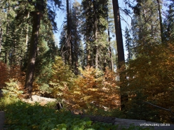 Sekvojos nacionalinis parkas (12)