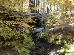 Sekvojos nacionalinis parkas (4)